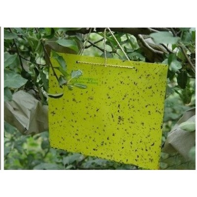 thrips whitefly stick insect glie paper traps