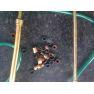 cocoa solo sprayer,solo lance sprayer,Trombone Sprayer,Reciprocating  sprayer,filter sprayer,solo pump lance