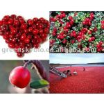 High-quanlity and lower price Cranberry P.E