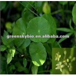 Asiatic Acid 95% HPLC Centella Asiatica Extract