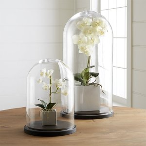 Tall Wood Base Glass Cloche Dome Cover Display Bell Jar Centerpie