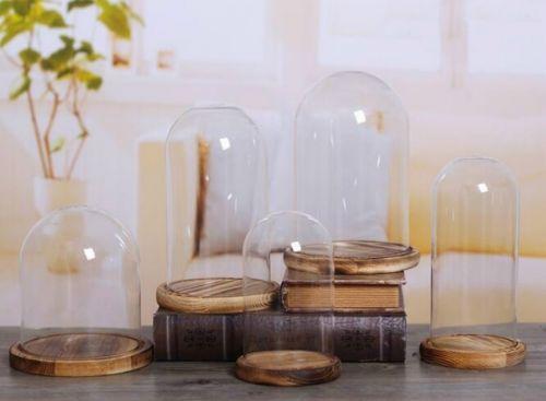 Pflanzen Terrarium Centerpiece Dome Display dekorative Klarglas Cloche Bell Gläser