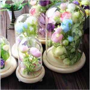 Small  Plant  Dome Display  Decorative Clear Glass  Cloche Bell Jars