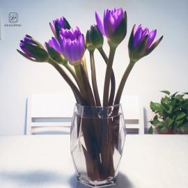 Small and exquisite Glassware  bud borosilicate glass vase
