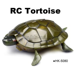 Real life crawl IR tortoise animal