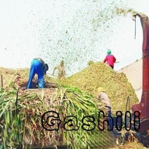 large model bamboo, sugarcane crushing machine 0086-13939083462