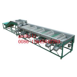 garlic sorting machine 0086-13643842763