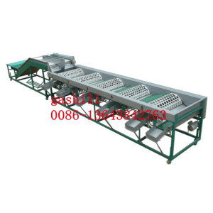 garlic sorting machine 0086-13643842763