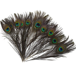 F-0587  10pcs/set natural peacock feathers eyes for DIY clothes decoration wedding party