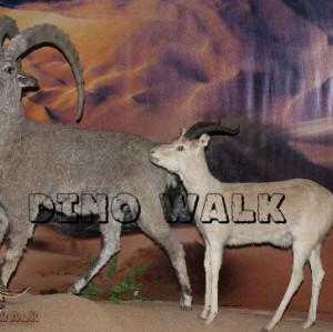 Antelope Model