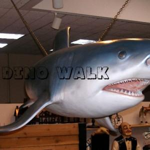 Alive look Shark