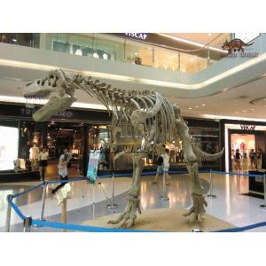 T-Rex Fossil Replica