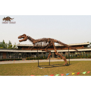 T-Rex Fossil displayed Exhibition