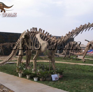 Exhibition Fossil Replica