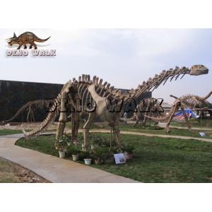 Exhibition Fossil Replica