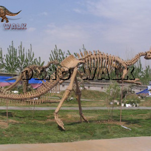 Replica Skeleton of Dinosaur