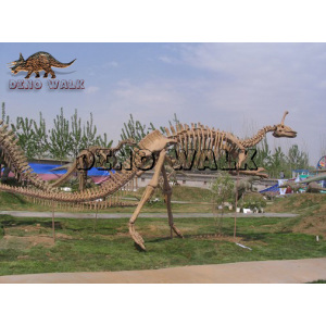 Replica Skeleton of Dinosaur