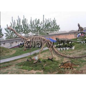 Dinosaur Fossil Exhibits