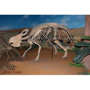 Protoceratops Fossil