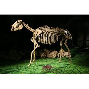 Hipparion Fossil