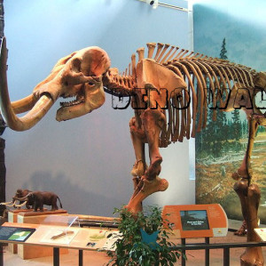 Mammuth Fossil Replica