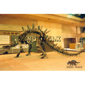 Stegosaurus Fossil with Museum Quality