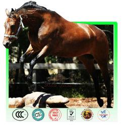 حيوان متحرك تشغيل الحصان النموذجية
