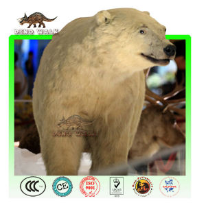 Museum Animatronic Polar Bear