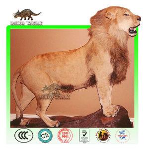 African Animatronic Lion