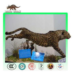 Safari Animal Model