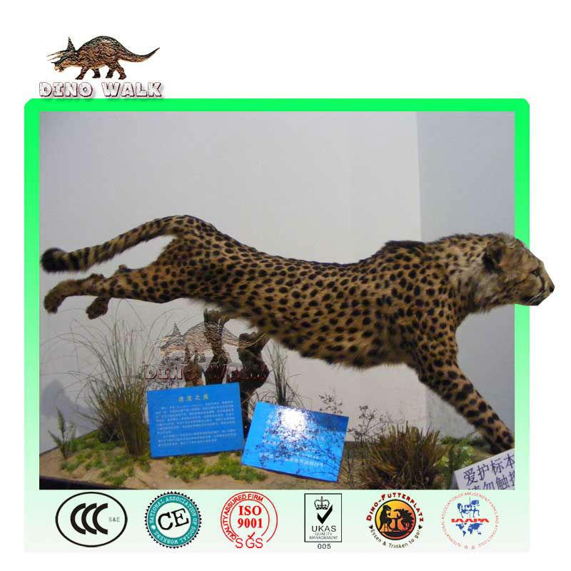 safari tier modell