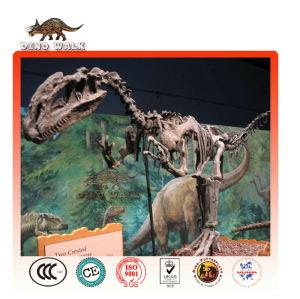 Allosaurus dinosaurier-fossil-modell
