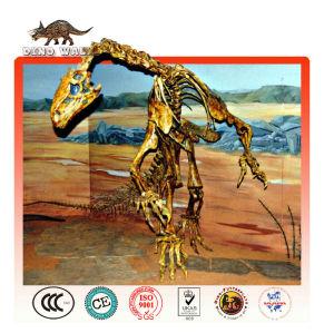 de fibra de vidrio personalizada de esqueleto de dinosaurio