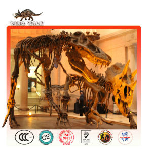 Educational Dinosaur Fossil Replica