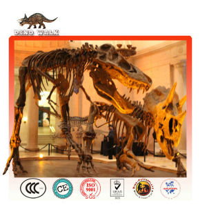 Educational Dinosaur Fossil Replica