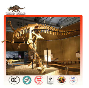 tamaño de la vida fósiles de dinosaurios de réplica