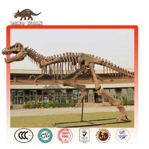 al aire libre de fibra de vidrio fósiles de dinosaurios