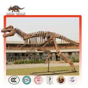 Outdoor Fiberglass Dinosaur Fossil