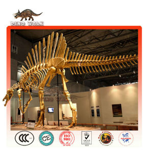esqueleto spinosaurus réplica