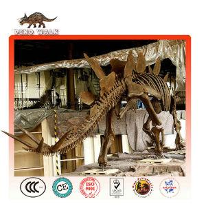 fósiles stegosaurus réplica