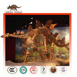 stegosaurus scheletro replica