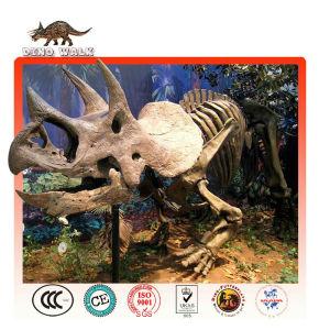 Triceratops Fossil Replica