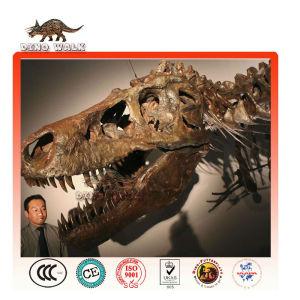 Tyrannosaurus Rex Fossil Replica