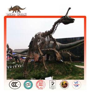 fósiles de dinosaurios de réplica de la exposición