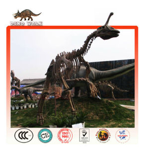 Dinosaur Fossil Replica Exhibition