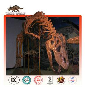 tamaño de la vida de esqueleto de dinosaurio de réplica