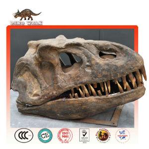 Baby t-rex fósiles de la cabeza de réplica