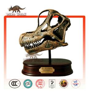 Brachiosaurus Head Fossil Gift