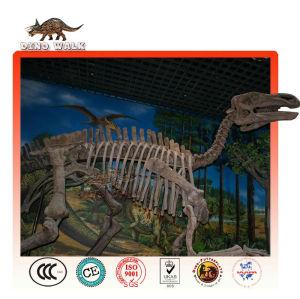 Qualität museum dinosaurier-fossil replik