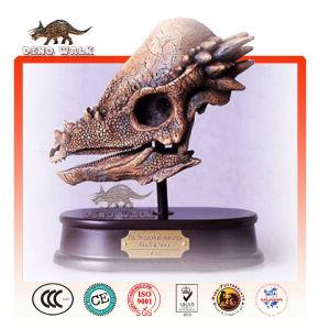 kopf skelett pachycephalosaur